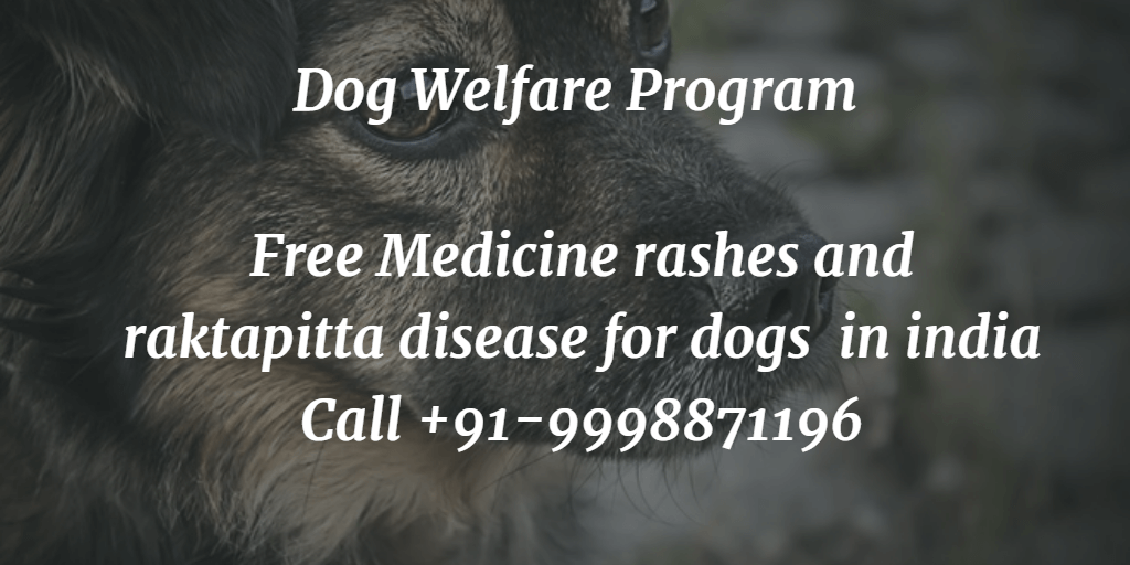Free Medicine rashes and raktapitta disease for dogs in india
