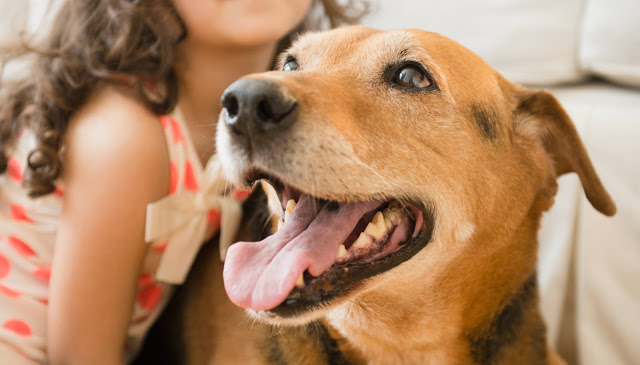 The Modern (Stressed Out) Pet Dog – 2016 Seminar