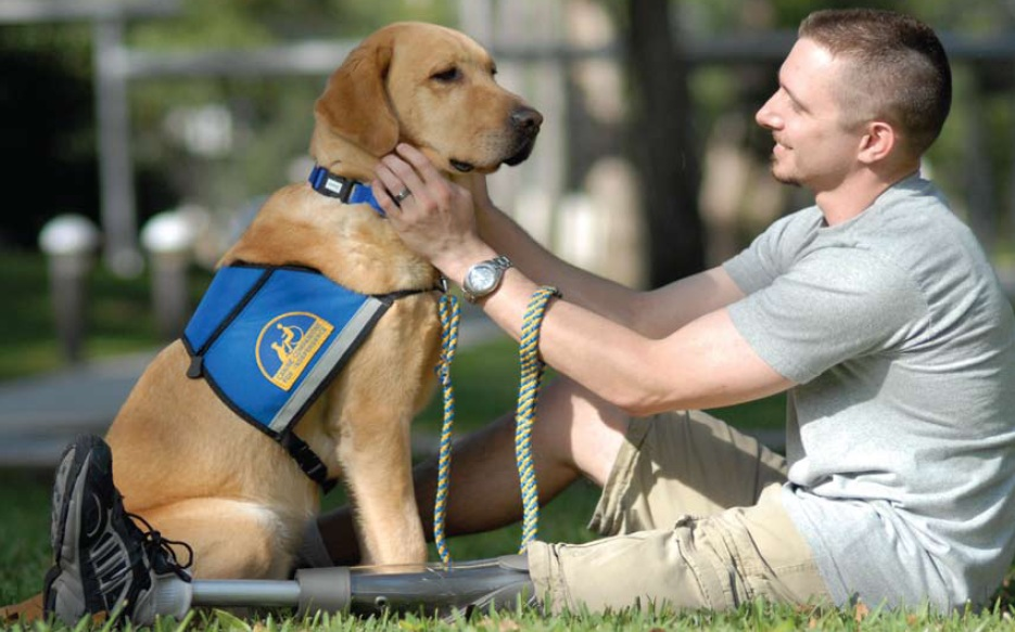 Rescue Dogs Helping Veterans With Ptsd