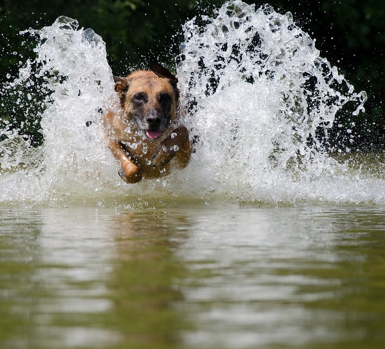 Important tips on the blue-green-eye danger for dogs in waters and lakes